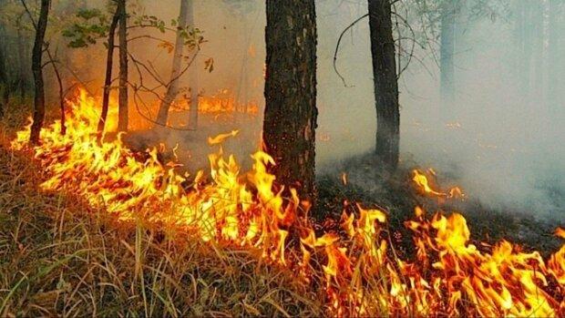 В четырех областях Украины объявили пожарную опасность