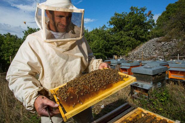 Горький День пасечника: пчеловод рассказал, почему в Украине вполовину сократился сбор меда